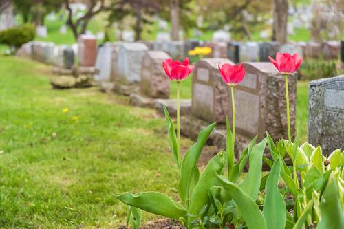 Funeral Insurance Companies